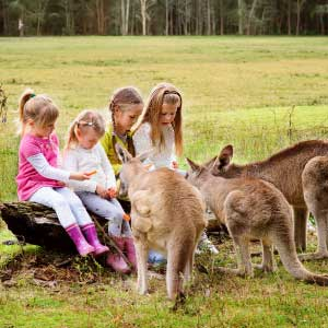 fertility in Australia